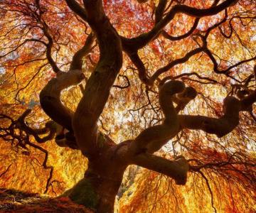 12 poze superbe cu copaci toamna