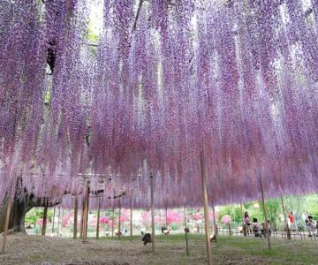 O umbrela de flori din Japonia