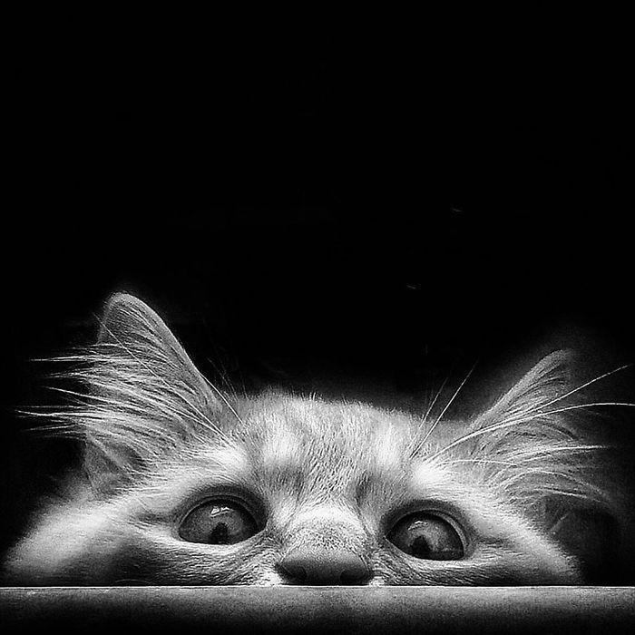 Viata de pisica, in poze adorabile - Poza 6
