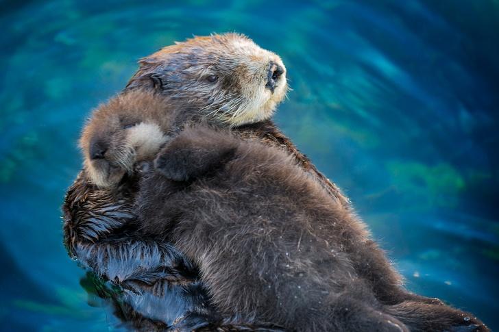 Cele mai simpatice animalute de la Polul Nord, in poze adorabile - Poza 1