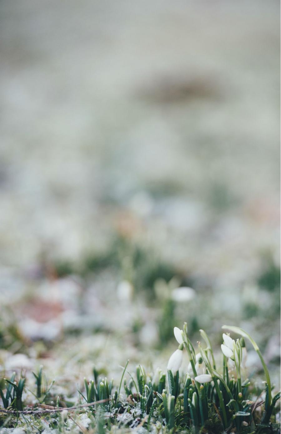 Peisaje primavara superbe care iti vor umple sufletul cu bucurie - Poza 8