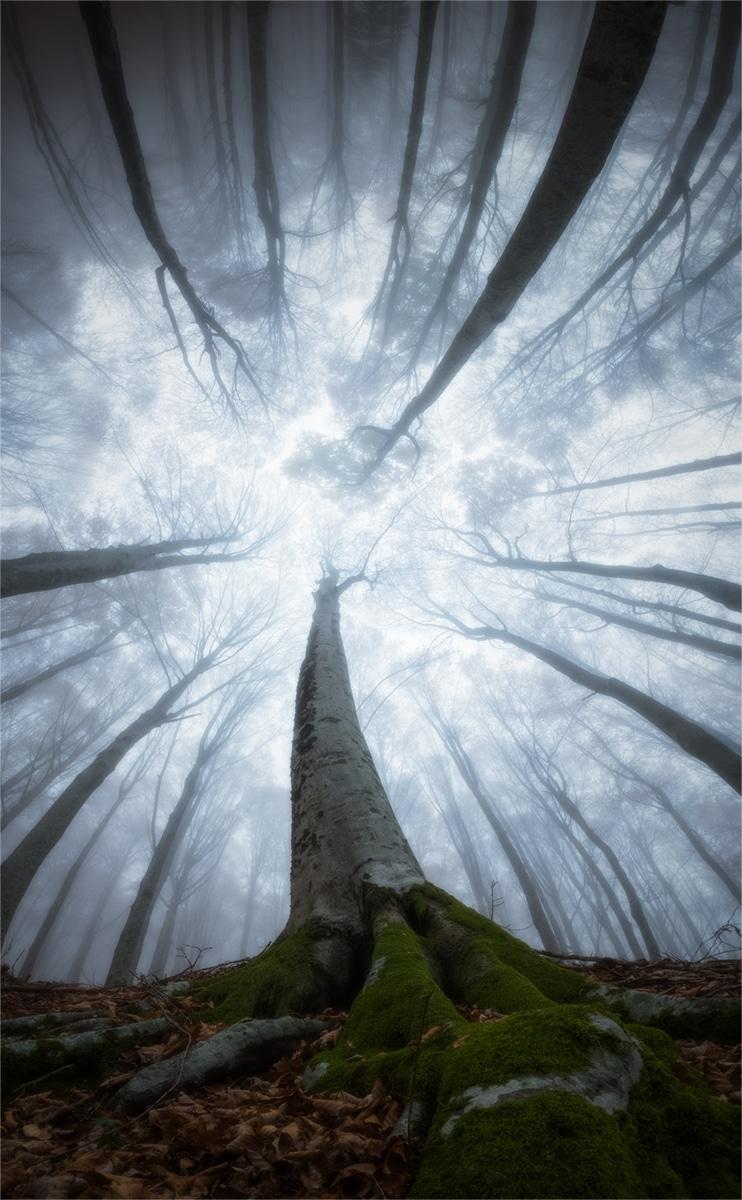 Splendoarea arborilor centenari, in urcusul lor spre cer - Poza 10