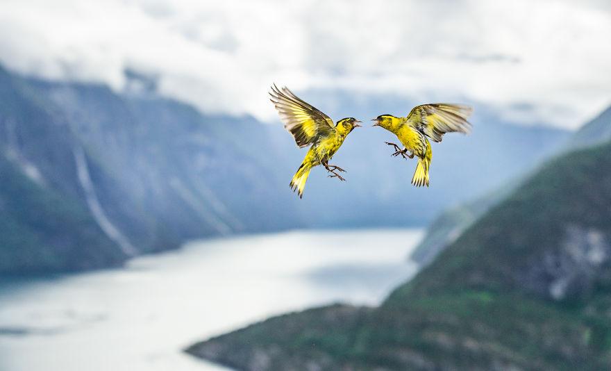 Cele mai bune fotografii cu si despre natura din 2019 - Poza 9