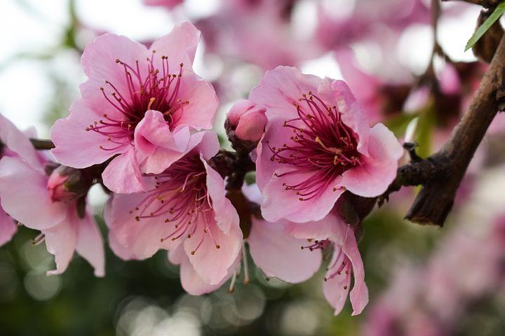 Splendoarea copacilor infloriti in poze superbe - Poza 16
