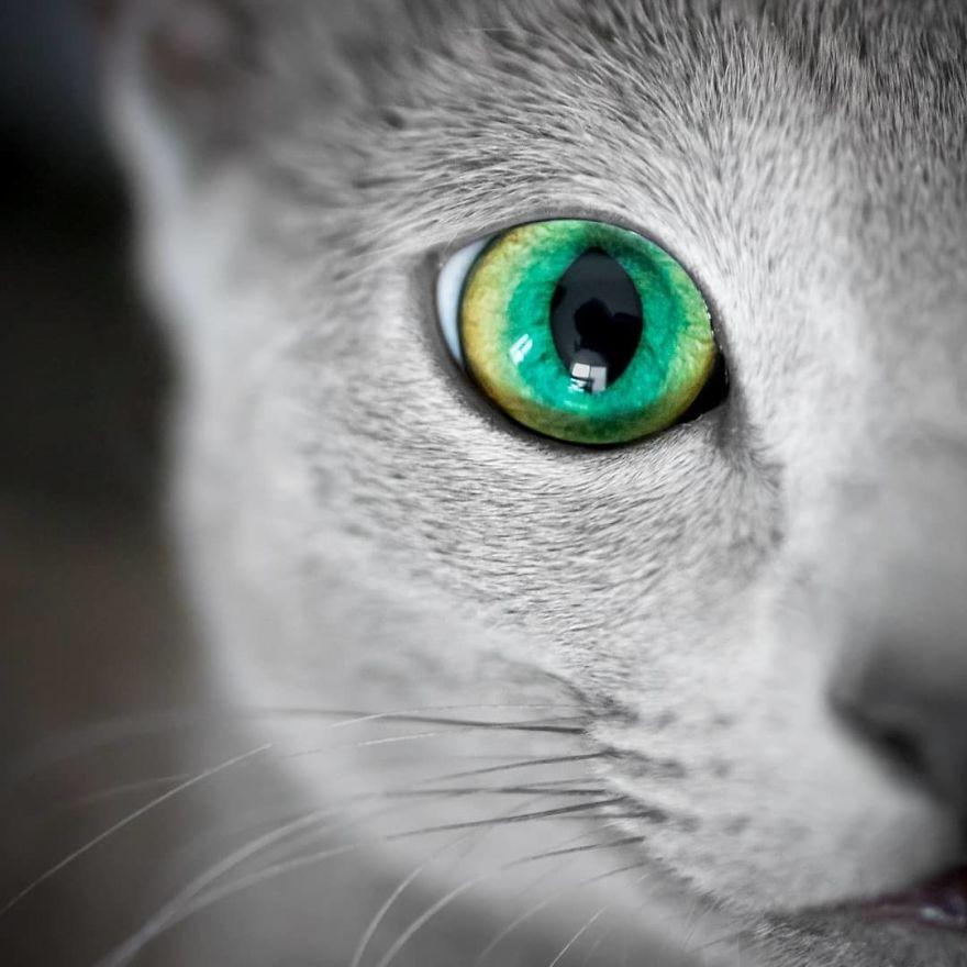 Pisicutele cu cei mai frumosi ochi din lume, in poze superbe - Poza 3
