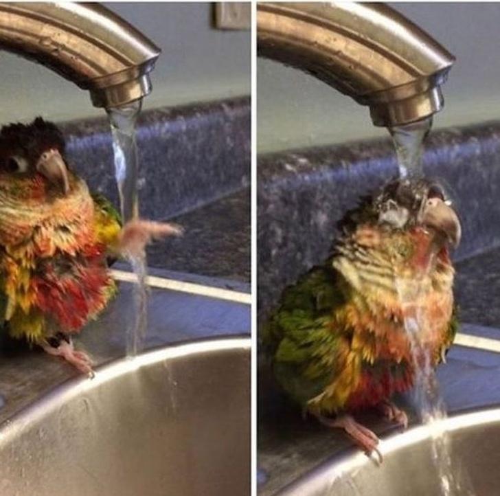 Cele mai adorabile animale, in cele mai bizare ipostaze - Poza 1