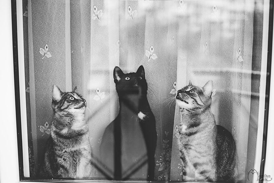 Pisici la fereastra, in poze alb-negru - Poza 7
