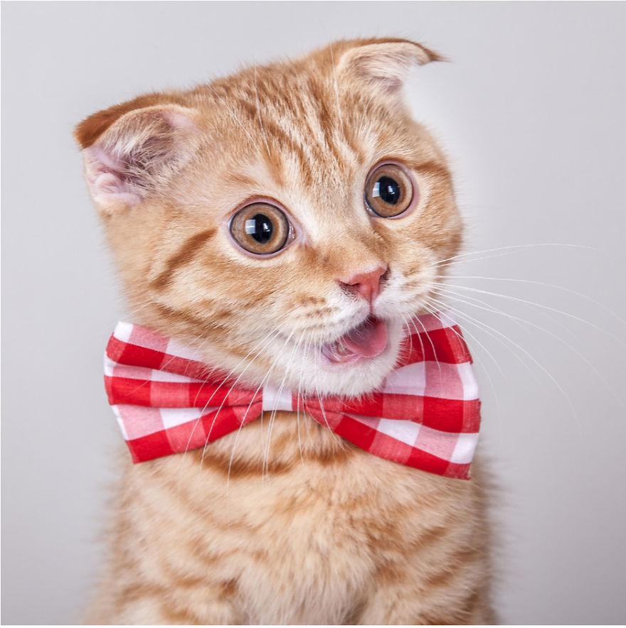 Cele mai frumoase poze cu pisici - Poza 14