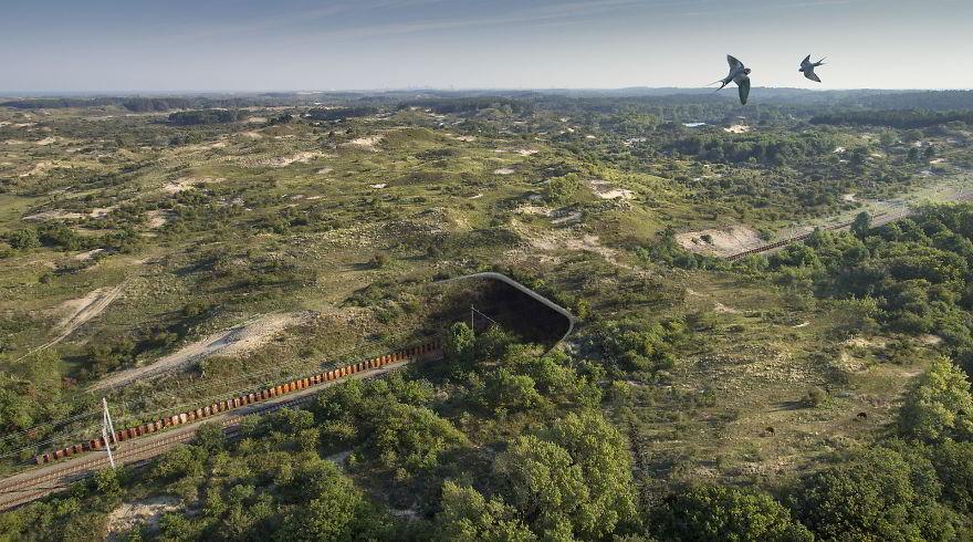 Poduri speciale pentru vietuitoarele salbatice - Poza 13