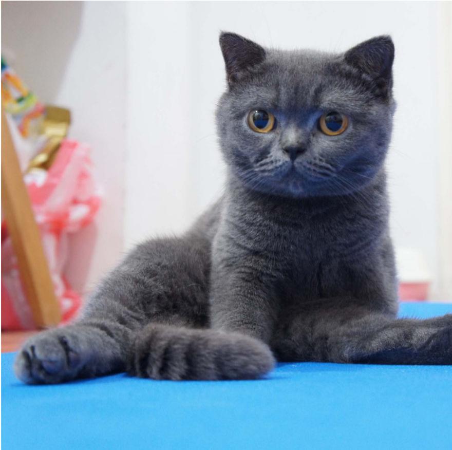 Cele mai frumoase poze cu pisici - Poza 25