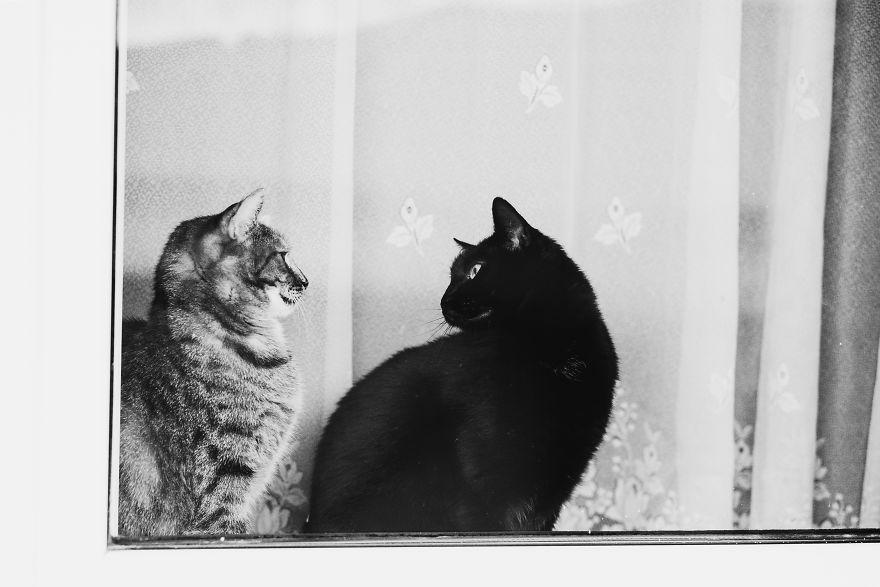 Pisici la fereastra, in poze alb-negru - Poza 16