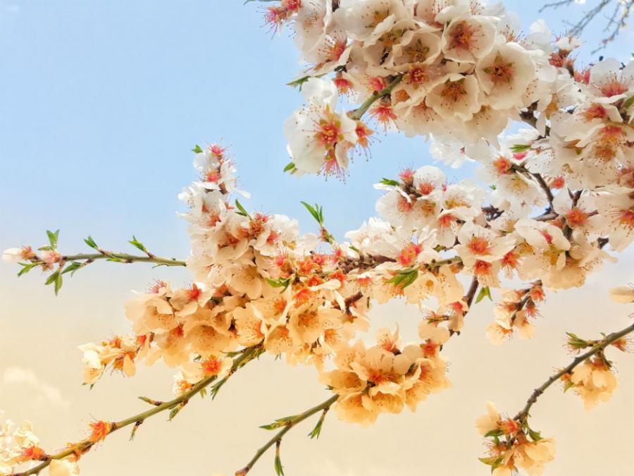 Peisaje primavara superbe care iti vor umple sufletul cu bucurie - Poza 10
