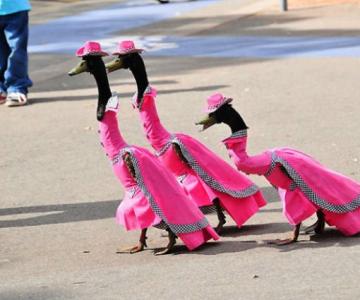 Parada inaripatelor: Rate si gaste, in rochii de gala