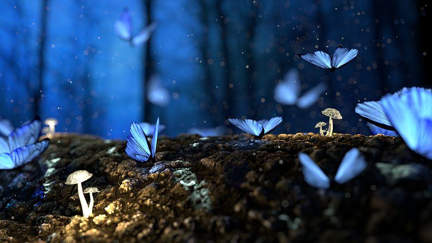 Cei mai frumosi fluturi din lume, in poze spectaculoase - Poza 29