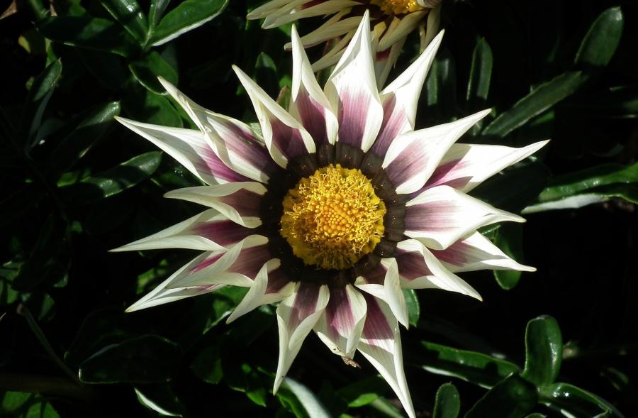 Cele mai frumoase flori din lume, intr-un pictorial de exceptie - Poza 22