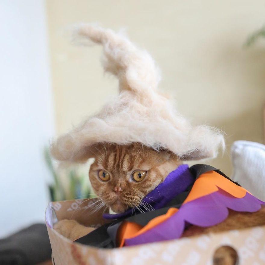 Cochete si haioase: Pisici cu palarii blanoase - Poza 7