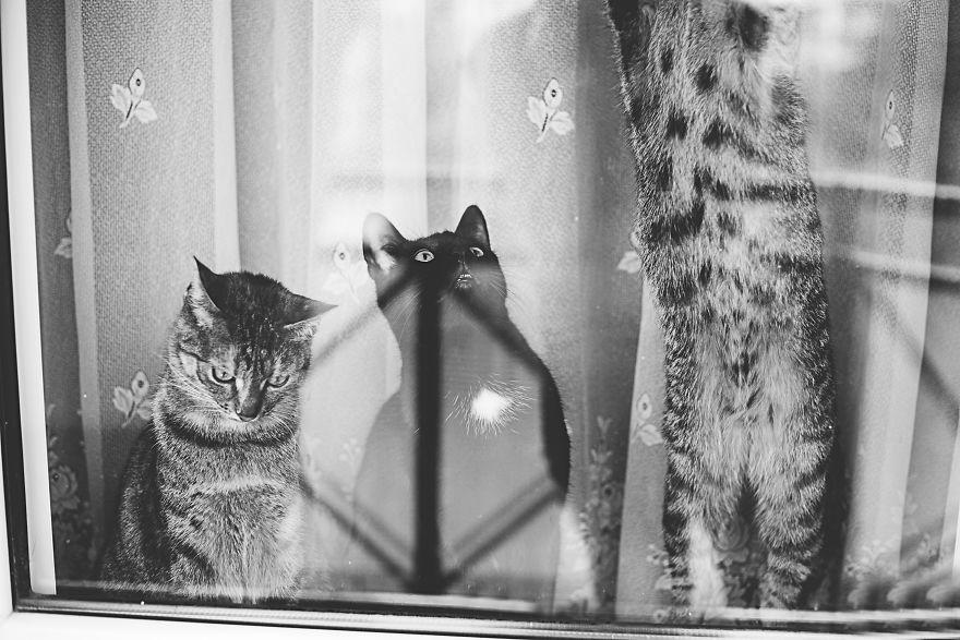 Pisici la fereastra, in poze alb-negru - Poza 9