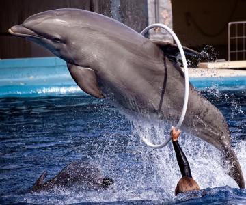 5 fotografii spectaculoase cu delfini