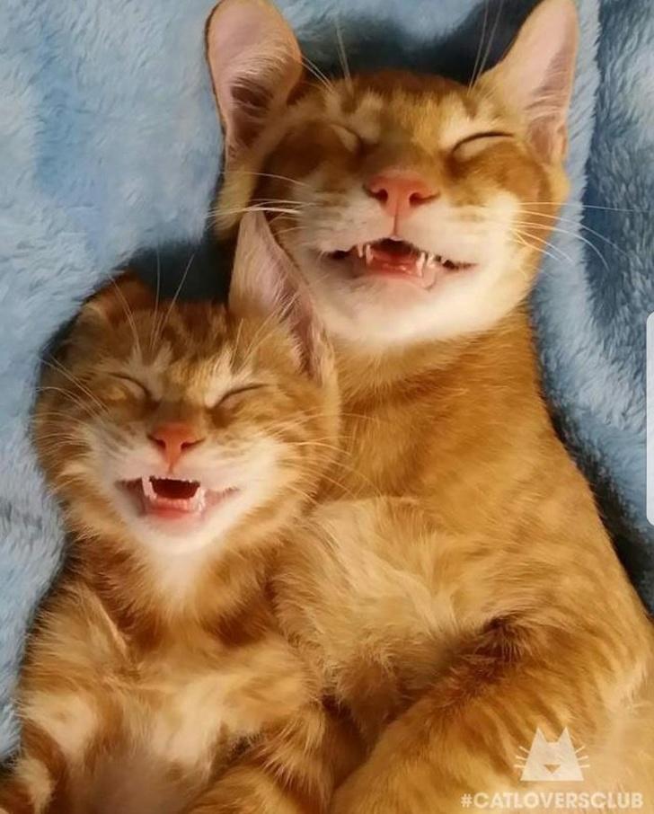 20+ Pisici adorabile si somnul lor nefiresc - Poza 4