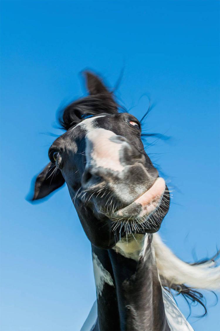 Premiile Comedy Wildlife: Poze amuzante cu animale salbatice - Poza 10