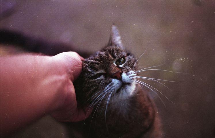 Studiile au demonstrat: Pisicile au puteri terapeutice - Poza 1