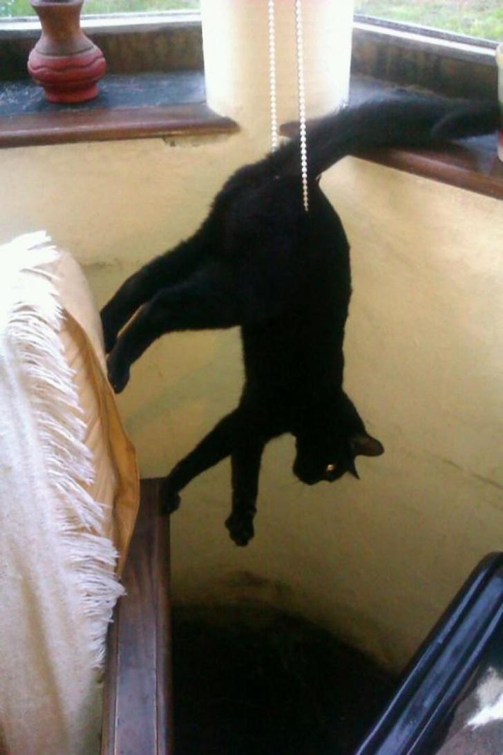 Pisicile chiar au simtul umorului. Avem dovada! - Poza 8