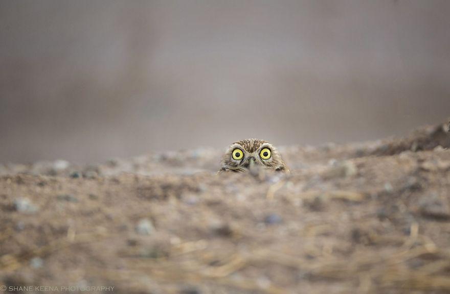 Comedy Wildlife Photography: Cele mai amuzante poze din salbaticie - Poza 10