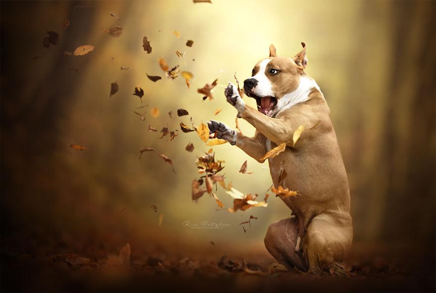 Bucuria sufletului frumos de caine, in poze superbe - Poza 19