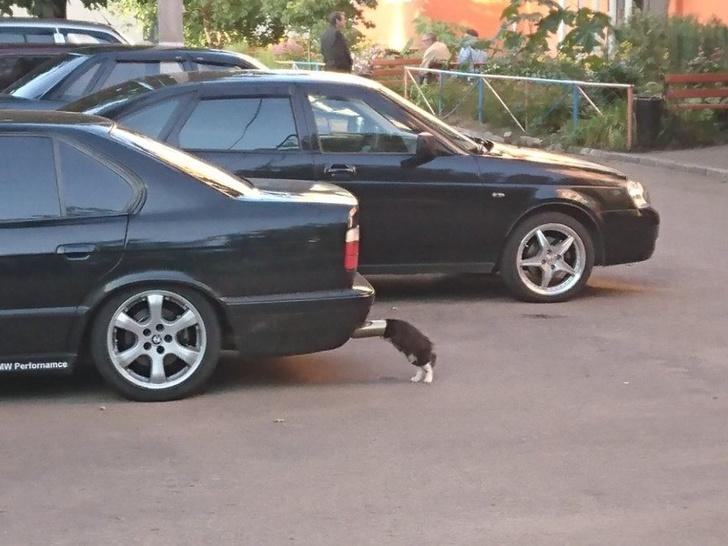 Pisicile chiar au simtul umorului. Avem dovada! - Poza 17