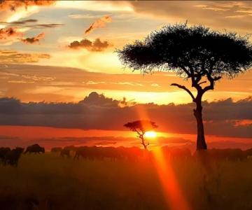 Taramuri mirifice: Kenya