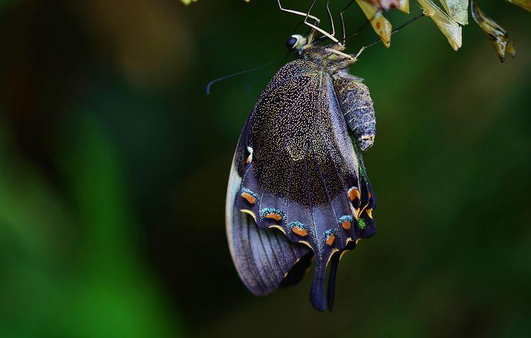 Cei mai frumosi fluturi din lume, in poze spectaculoase - Poza 27