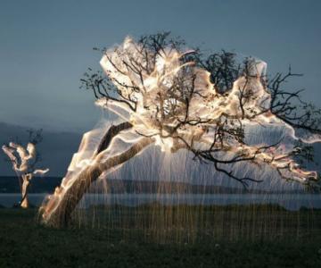 Sculpturi temporare: Copaci invaluiti in scantei