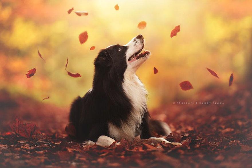 Portrete autumnale de suflet, de Anne Geier - Poza 12