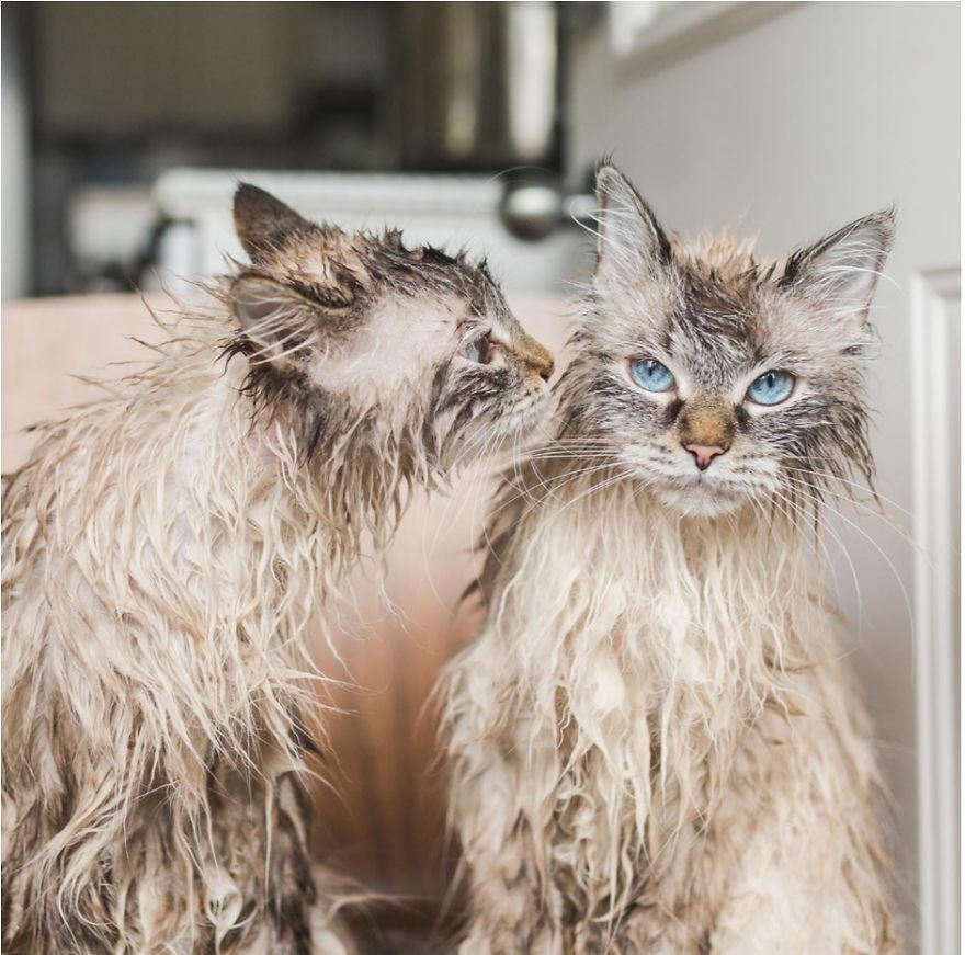 Cele mai frumoase poze cu pisici - Poza 7