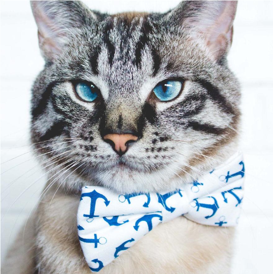 Cele mai frumoase poze cu pisici - Poza 1