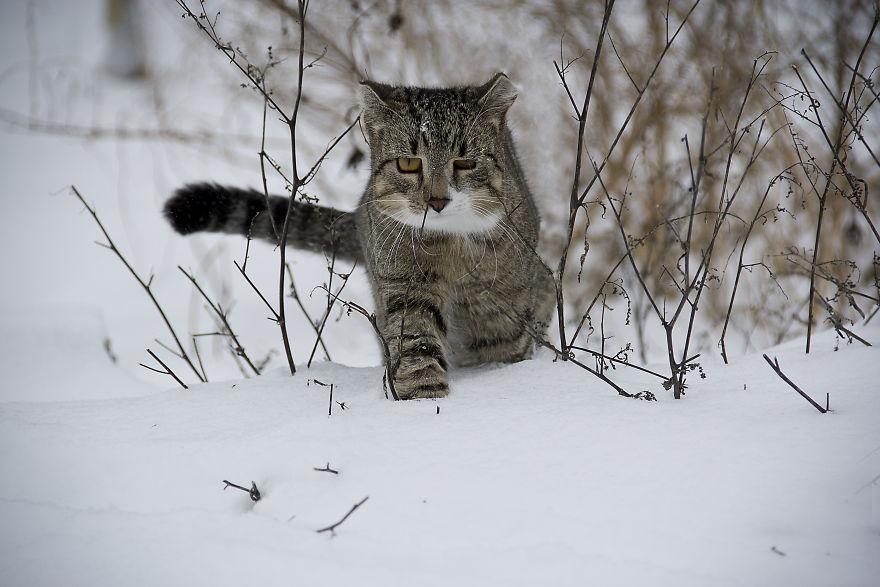Animale colturoase, de Aditya - Poza 10