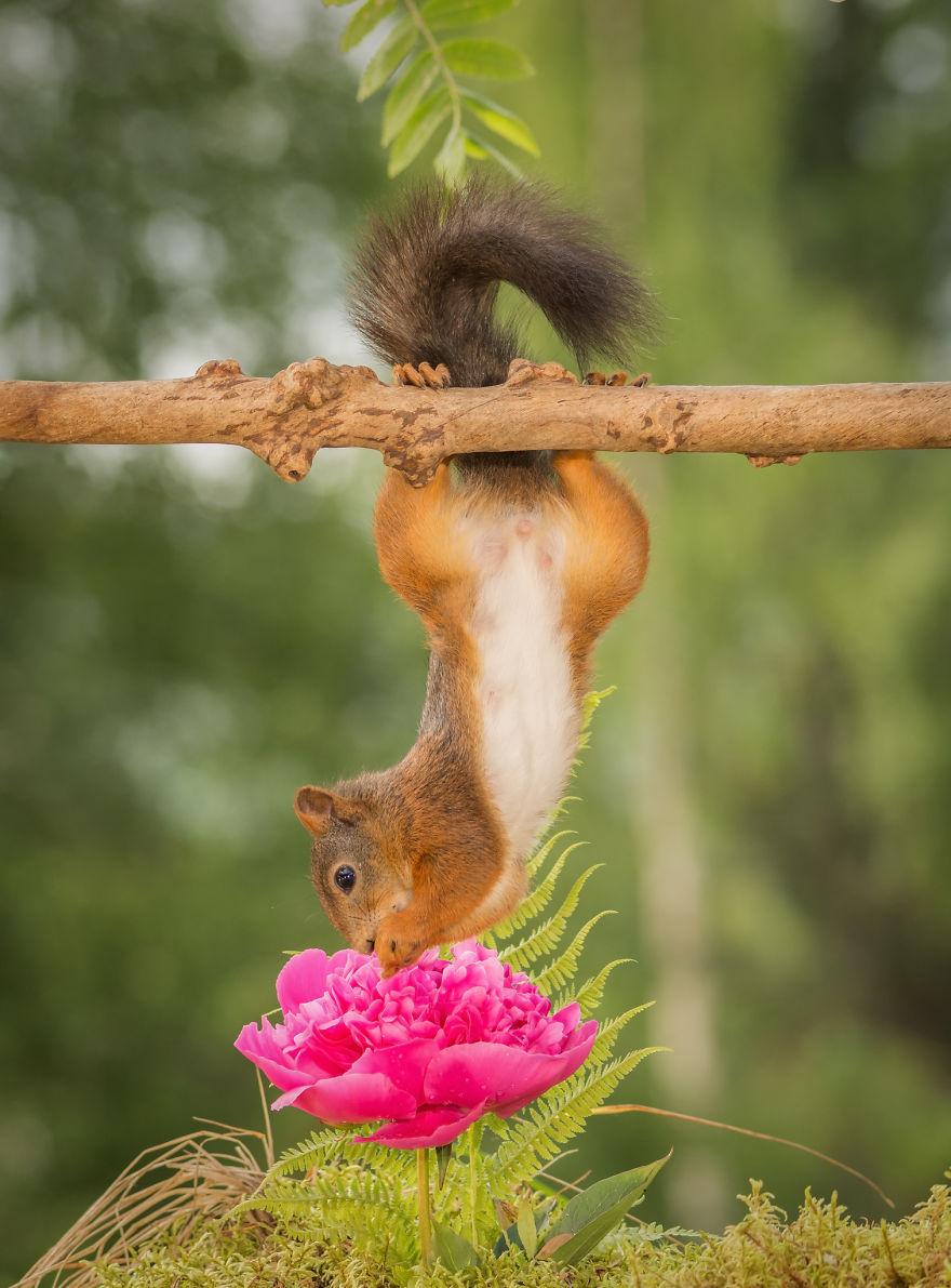 Frumoasa poveste cu veverite roscate, intr-un pictorial adorabil - Poza 8