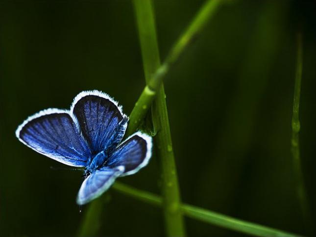 Natura la control, in 40 de poze - Poza 23