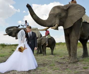 Nunta-safari, calare pe elefanti