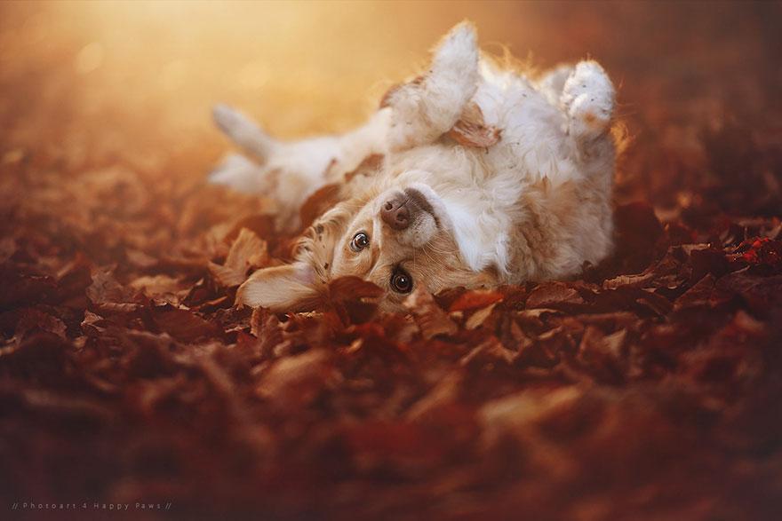 Portrete autumnale de suflet, de Anne Geier - Poza 10