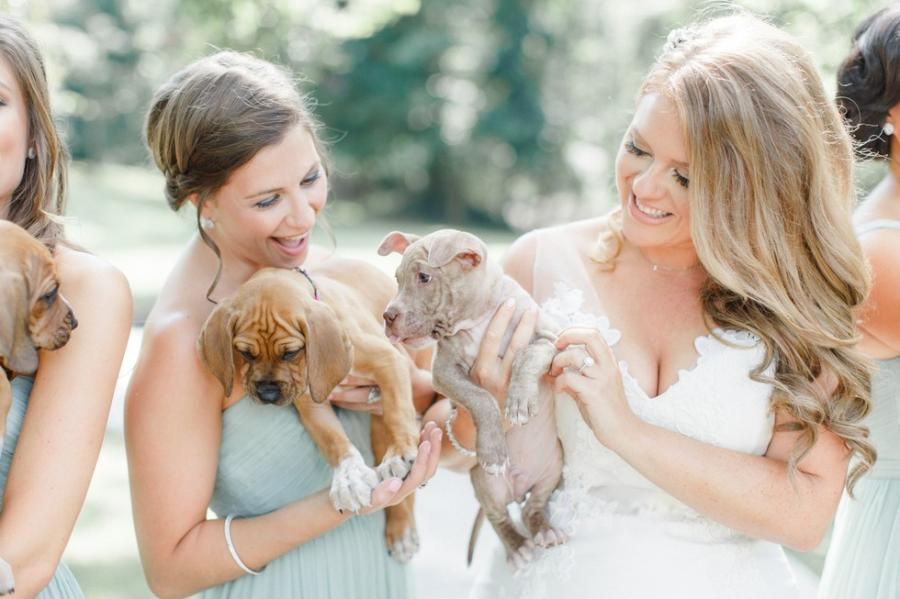 Cum arata imaginile de la nunta unui cuplu iubitor de animale? - Poza 2
