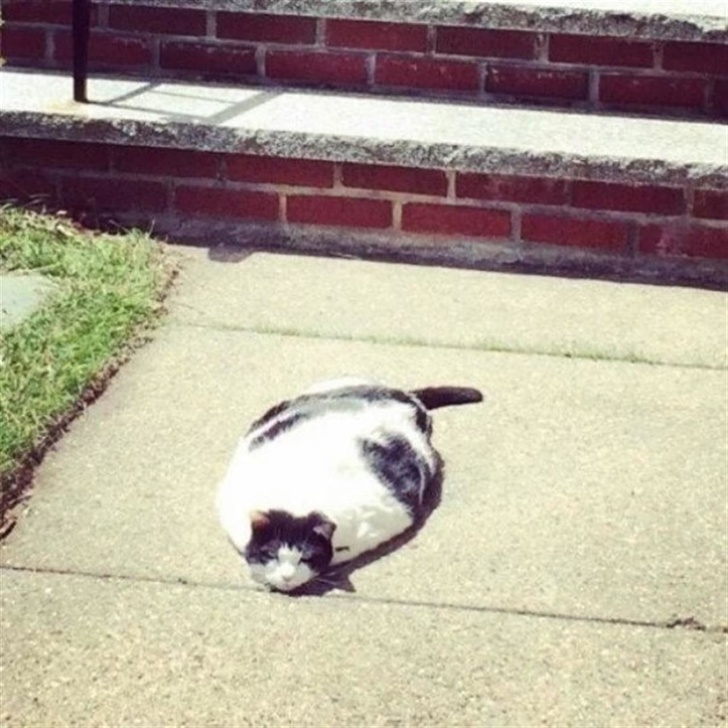 Pisicile chiar au simtul umorului. Avem dovada! - Poza 3