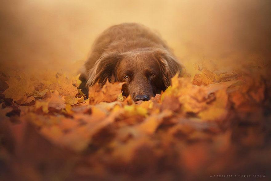Portrete autumnale de suflet, de Anne Geier - Poza 5
