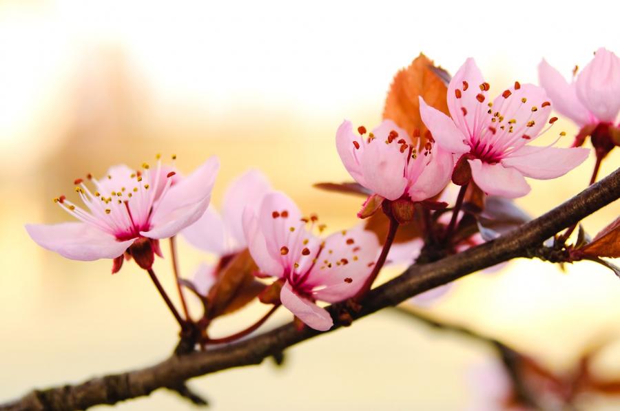 Cele mai frumoase flori din lume, intr-un pictorial de exceptie - Poza 18