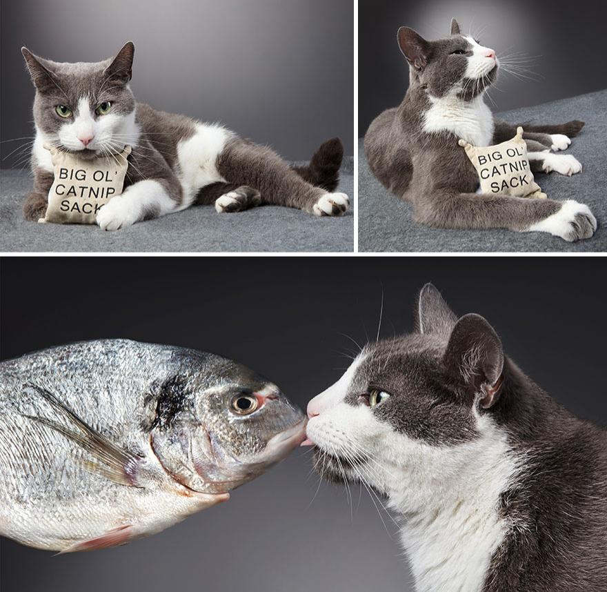 Cele mai frumoase pisici, intr-un pictorial atipic - Poza 6