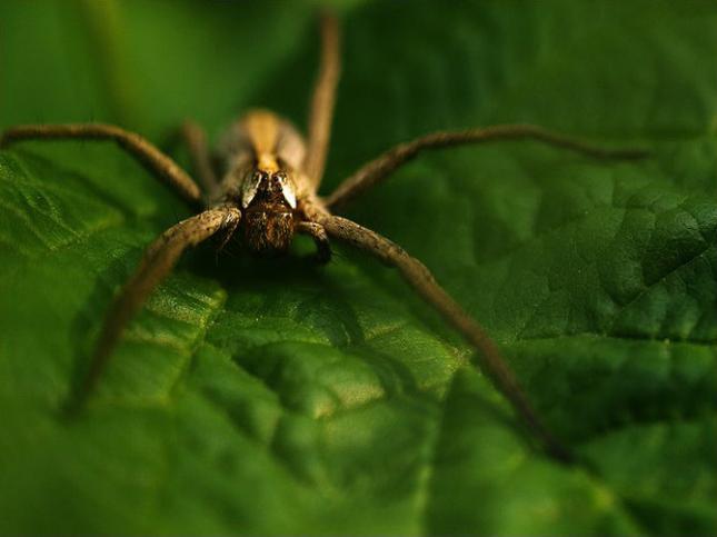 Natura la control, in 40 de poze - Poza 15