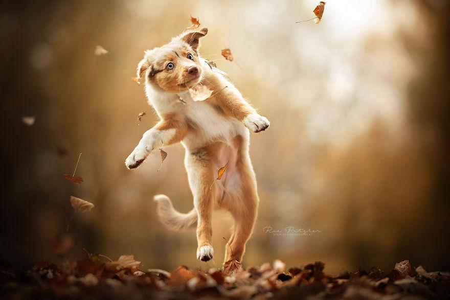 Bucuria sufletului frumos de caine, in poze superbe - Poza 4