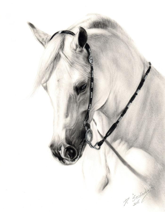 Arta realistica: Lumea animala, in picturi superbe - Poza 8