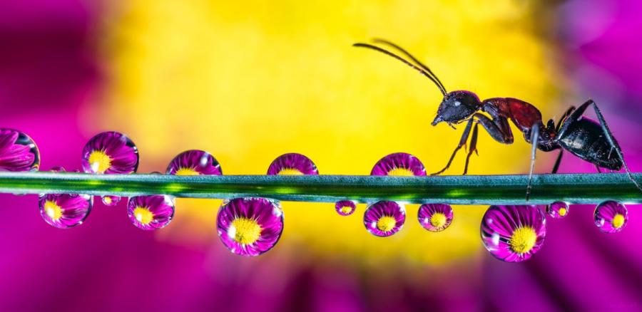Cum se oglindeste frumusetea naturii in picaturi limpezi de apa - Poza 1