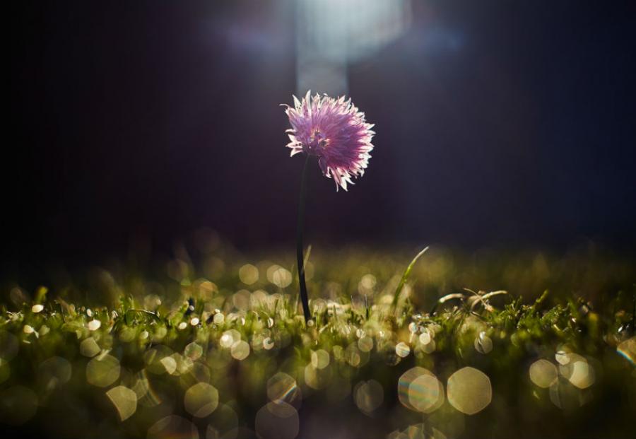 Peisaje primavara superbe care iti vor umple sufletul cu bucurie - Poza 20